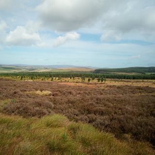 landscape view of peatland in Northumberland