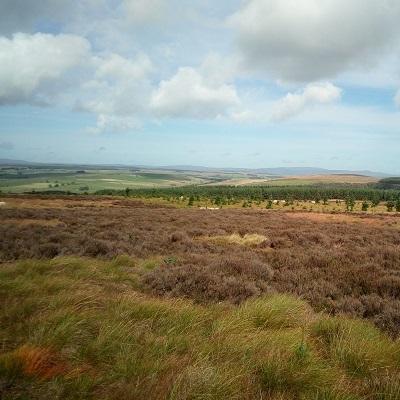 Peatland landscape in Northumberland