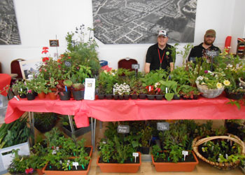 Hepscott park members selling a range of home grown plants