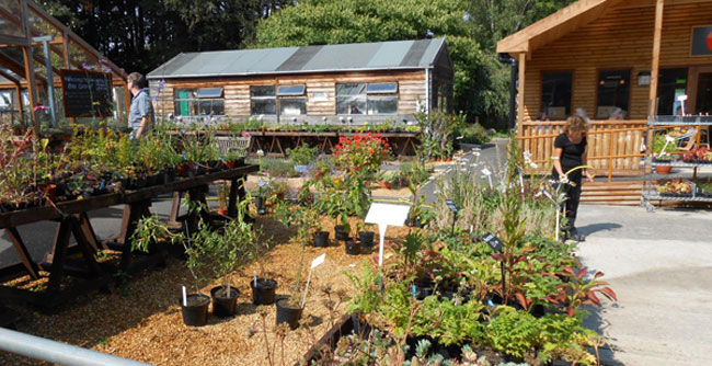 Hepscott main garden area filled with different plants