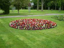 Flower bed at Hirst Park