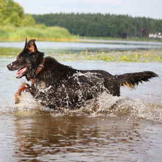 Image demonstrating Beware of fast flowing water when walking dogs