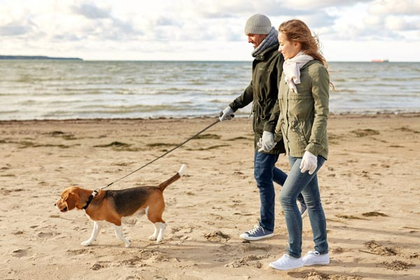Image demonstrating Return of free waste bagsfor Green Dog Walkers