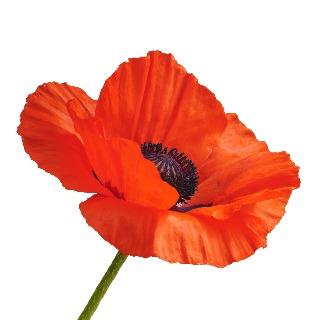 Image demonstrating Remembrance Day Service Invite