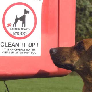 Showing the maximum penalty of £1000 for not cleaning up after your dog with a dog in the foreground
