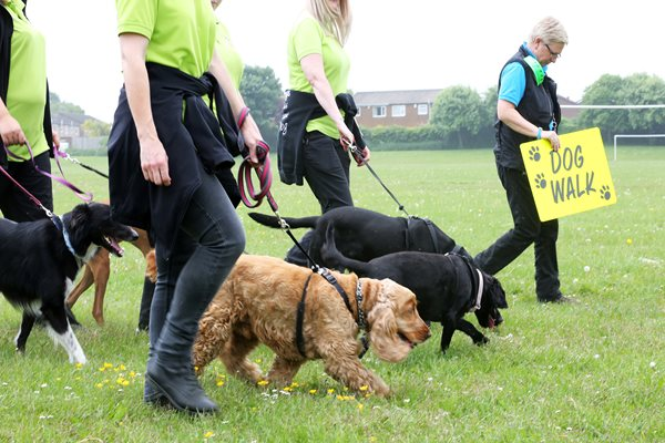 Image demonstrating Green Dog Walkers scheme to celebrate 1st birthday at Blyth