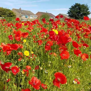 Image showing Roadside wildflowers are blooming marvellous