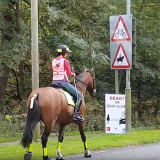 Image demonstrating County leading the way on keeping horses and riders safe