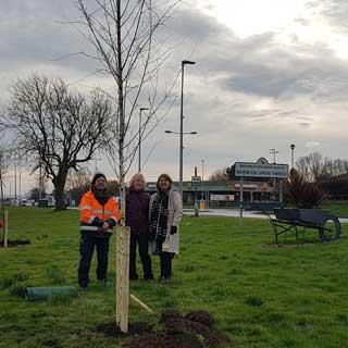 Tree planting taking place in Berwick