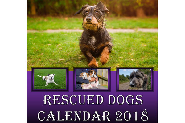 Image demonstrating Rescue dogs to be stars of 2018 charity calendar