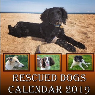 Image demonstrating Rescue dogs are stars of 2019 charity calendar