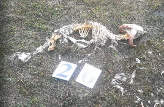 Image demonstrating Failure to dispose of dead stock lands  farmer in court