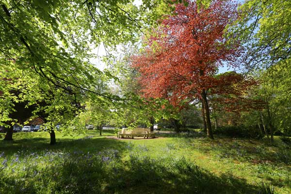 Image demonstrating County parks once again among the UK's best green spaces