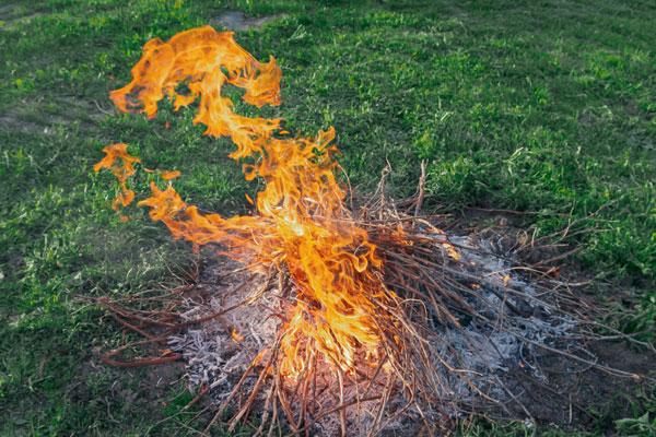 a bonfire in a garden
