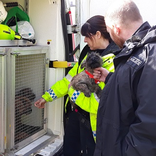 cute dogs rescued by police officers