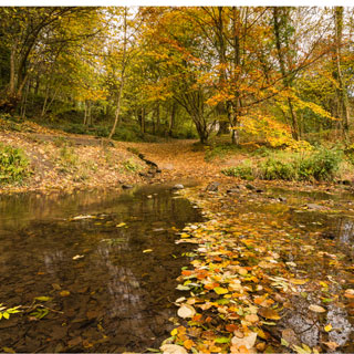 Image showing Plessey Woods Country Park & visitor centre