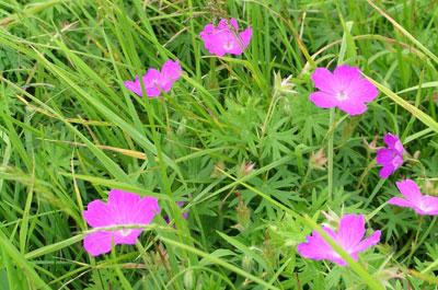 Image showing Ecology