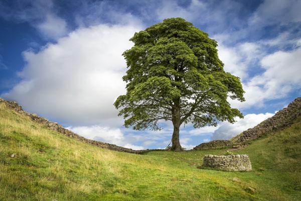 Image showing Trees & shrubs