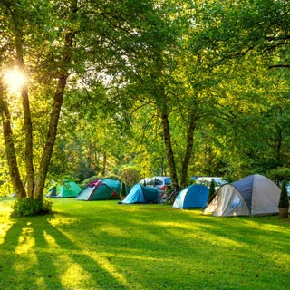 Tents camping out in a forest