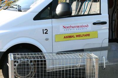 Image showing Animal welfare & dog control