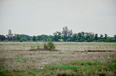 Image showing Contaminated land