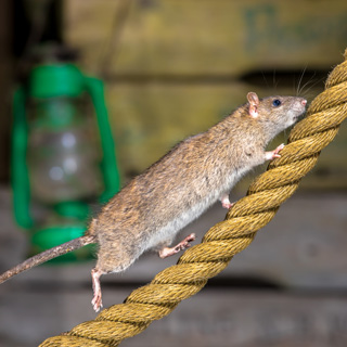 Image showing Pest control for your home
